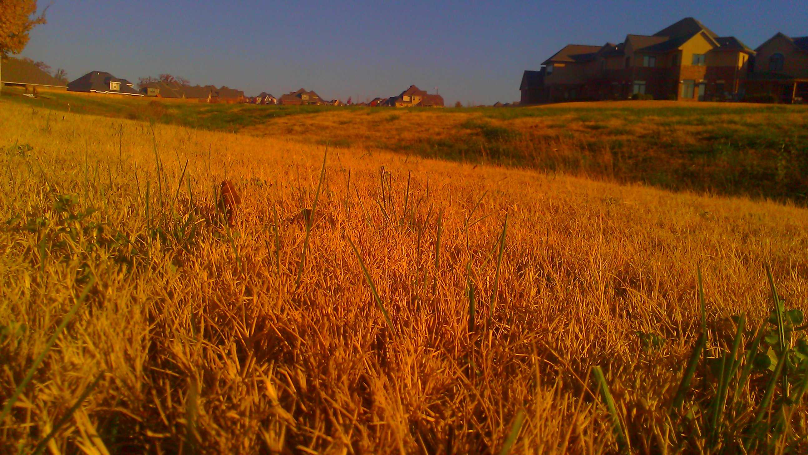Rogers Dry Grass