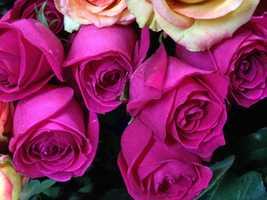 """Dark Pink: appreciation, gratitude, """"Thank You"""""""