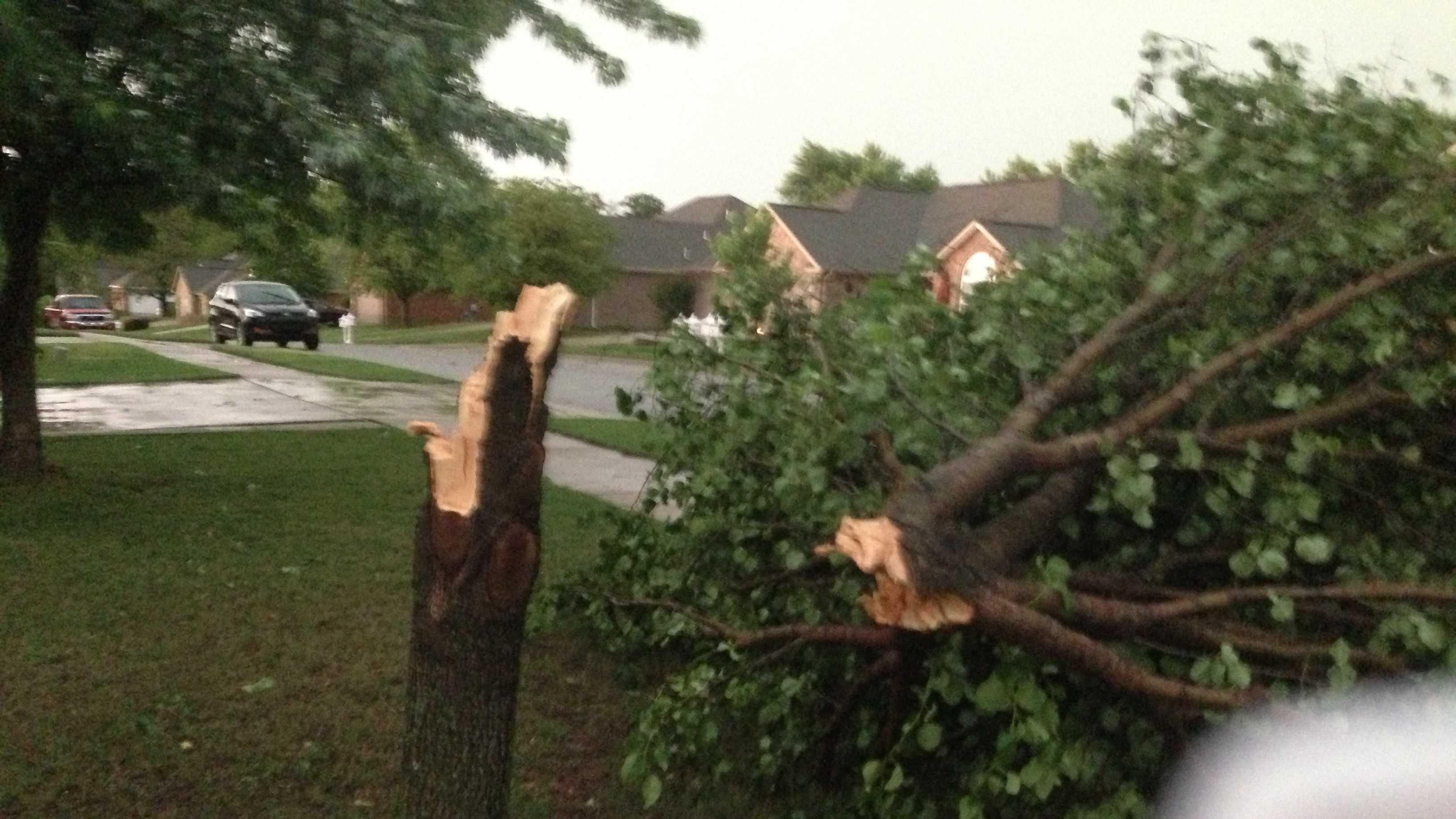 tree down in springdale.jpeg