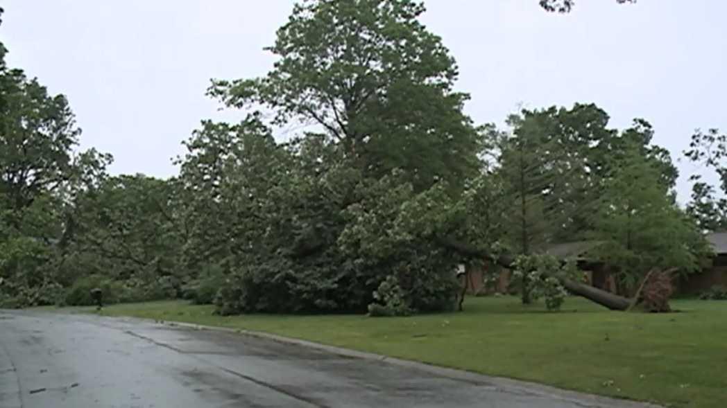 Siloam Springs tree down