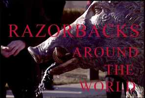 Razorbacks and wild hogs are a popular topic for sculptors across the globe.