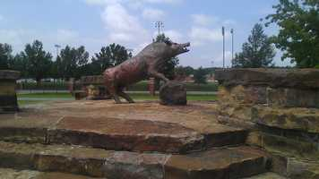 """Big Red"" at the The Gardens is just one of many hogs statues on campus at the University of Arkansas."