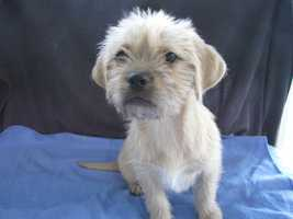 There are a few pug & terrier mix puppies that need homes.