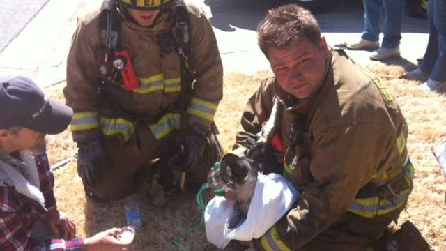 Springdale Firefighters save puppy.jpg
