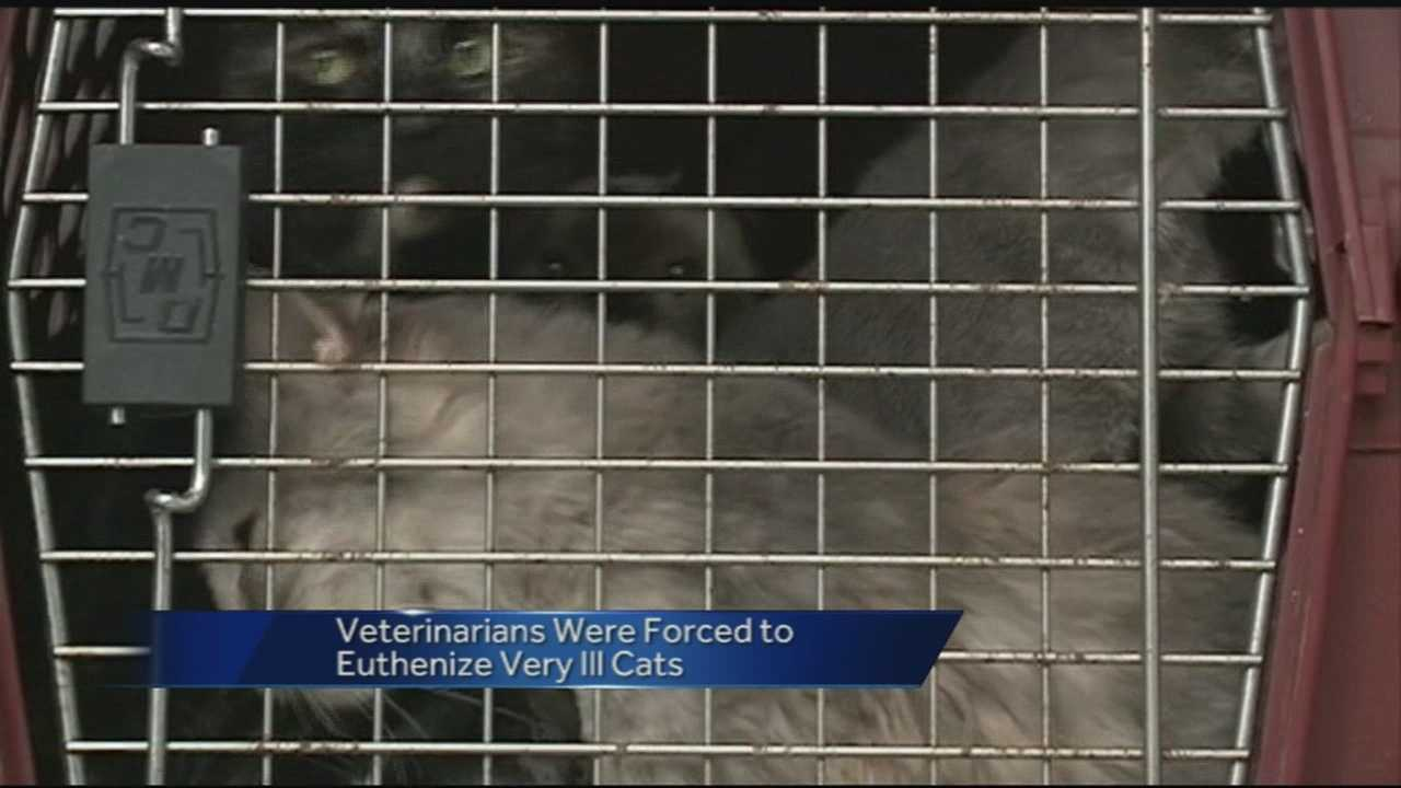 200+ Cats rescued from Fort Smith home