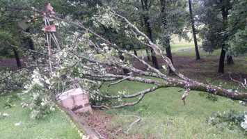 Damage to trees in a backyard in Greenwood from high wind and rain.
