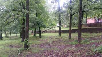 More trees uprooted in Greenwood.