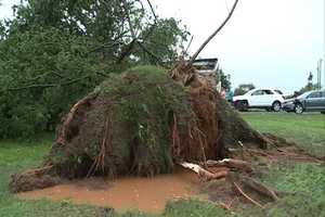 This tree fell on a storm shelter and trapped the owner inside.