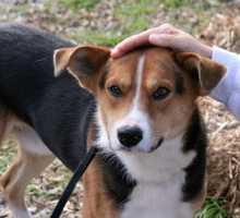 Collie Mix • Adult • Male • MediumSpayed/Neutered • Current on vaccinationshttps://www.petfinder.com/petdetail/34017481