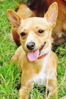 Terrier Mix • Adult • Female • Smallhttps://www.petfinder.com/petdetail/33298410