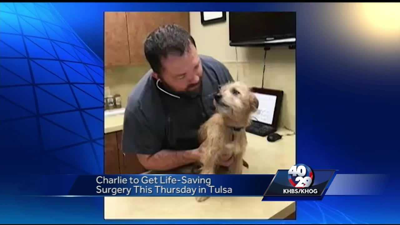 Charlie the Puppy to Get Surgery