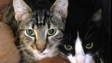 Cat owners are being warned about a parasite that can be deadly.