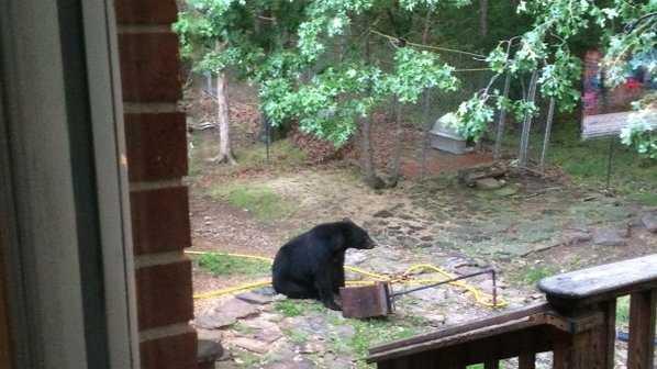 bear fayetteville