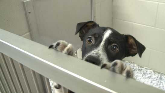 Dog at the shelter
