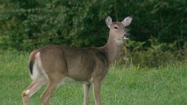 Busy deer season poses dangers for drivers