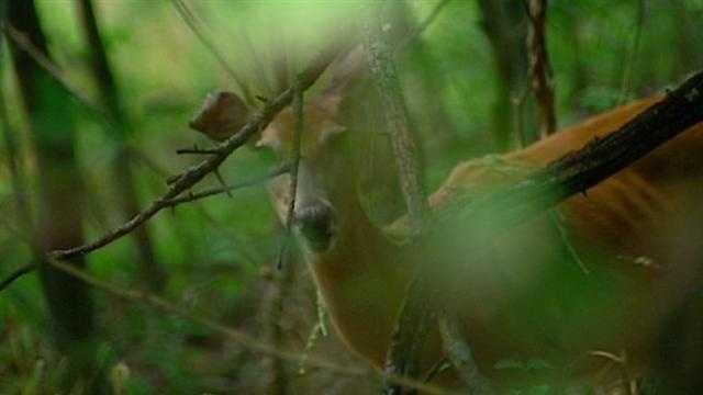 Fatal crash spotlights deer danger for drivers