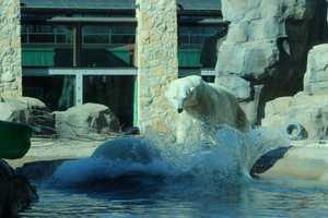 From the Kansas City Zoo: Kansas City Zoo is open 9:30 a.m. – 4 p.m. daily, November through February.