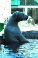 From the Kansas City Zoo: Again, Berlin's laid-back personality combined with young Nikita's teenage attitude created a good balance.