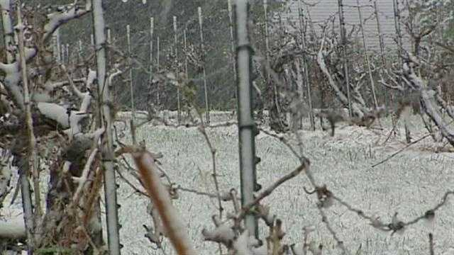 Vineyard worries about springtime snow