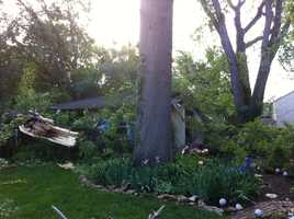 A damaged tree at 68th and Wornall.Upload your own pictures to u Local