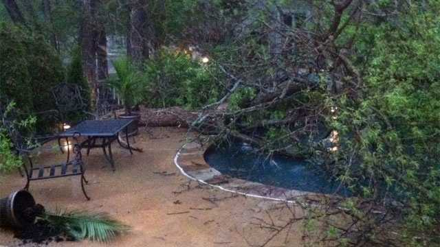 Image Tree in swimming pool
