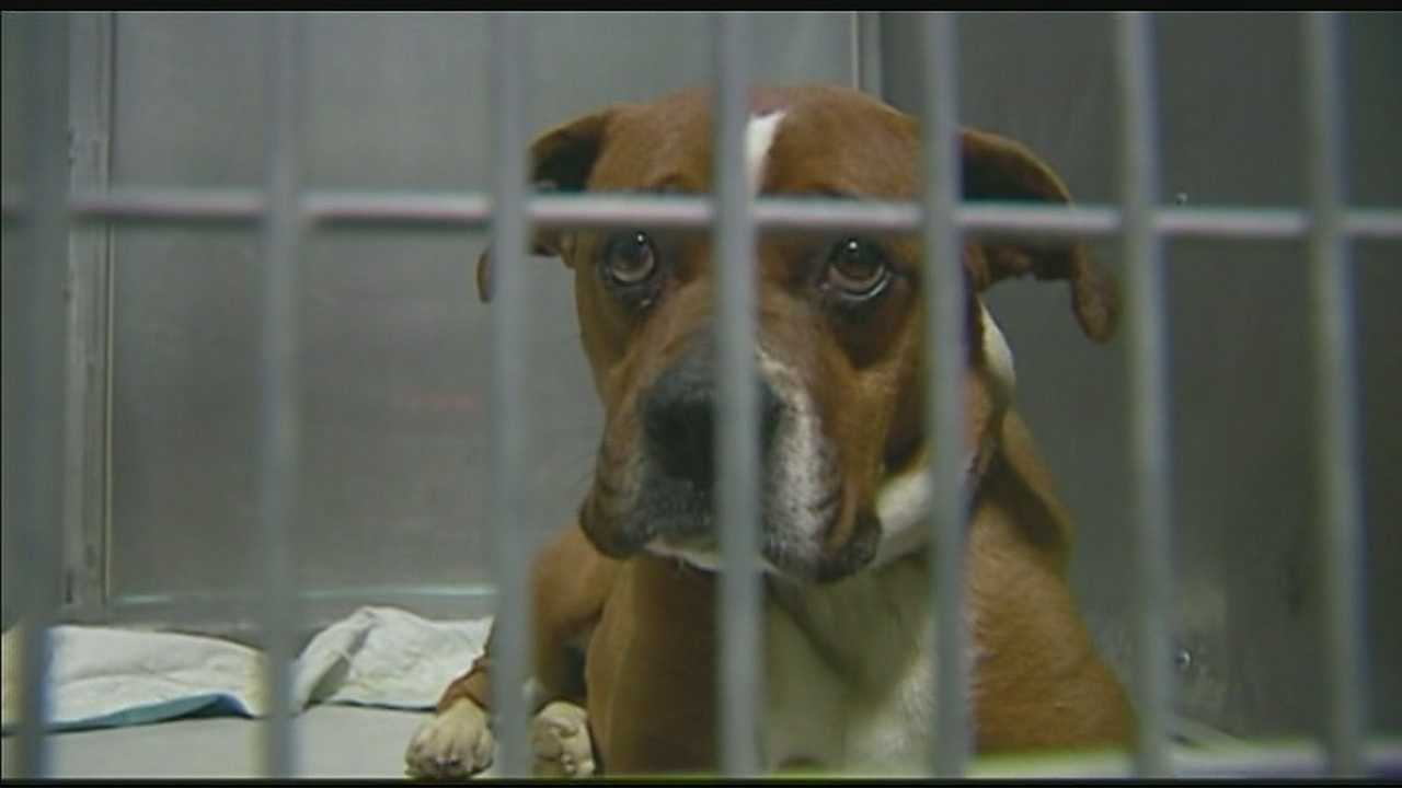 Kansas City Pet Project nurses 3 dogs back to health