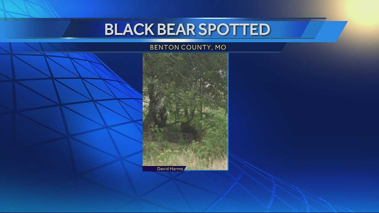 Image Benton County black bear