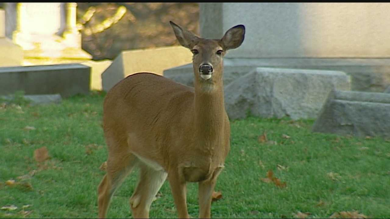 A deer that grew up in Elmwood Cemetery and became famous for befriending a stray dog has been found dead of a gunshot wound on the grounds of the cemetery.