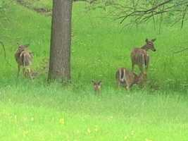 If you see one deer, it is likely there are more close by. (Kansas Insurance Commissioner's Office)