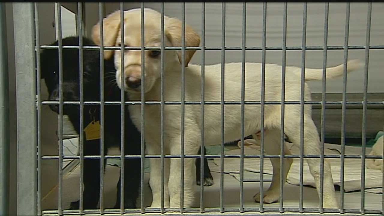 Image Pets seized in pet store raid