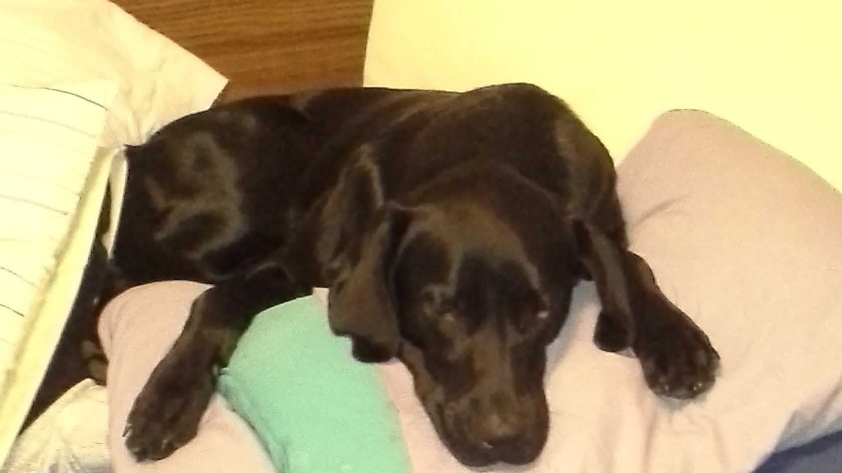 Family searches for lost dog after Thanksgiving crash