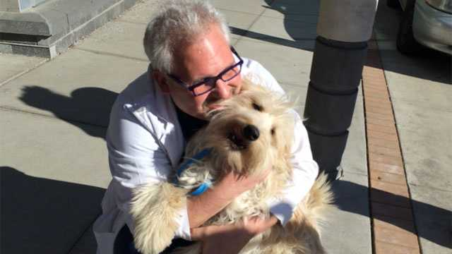 Image Stolen dog, owner reunited