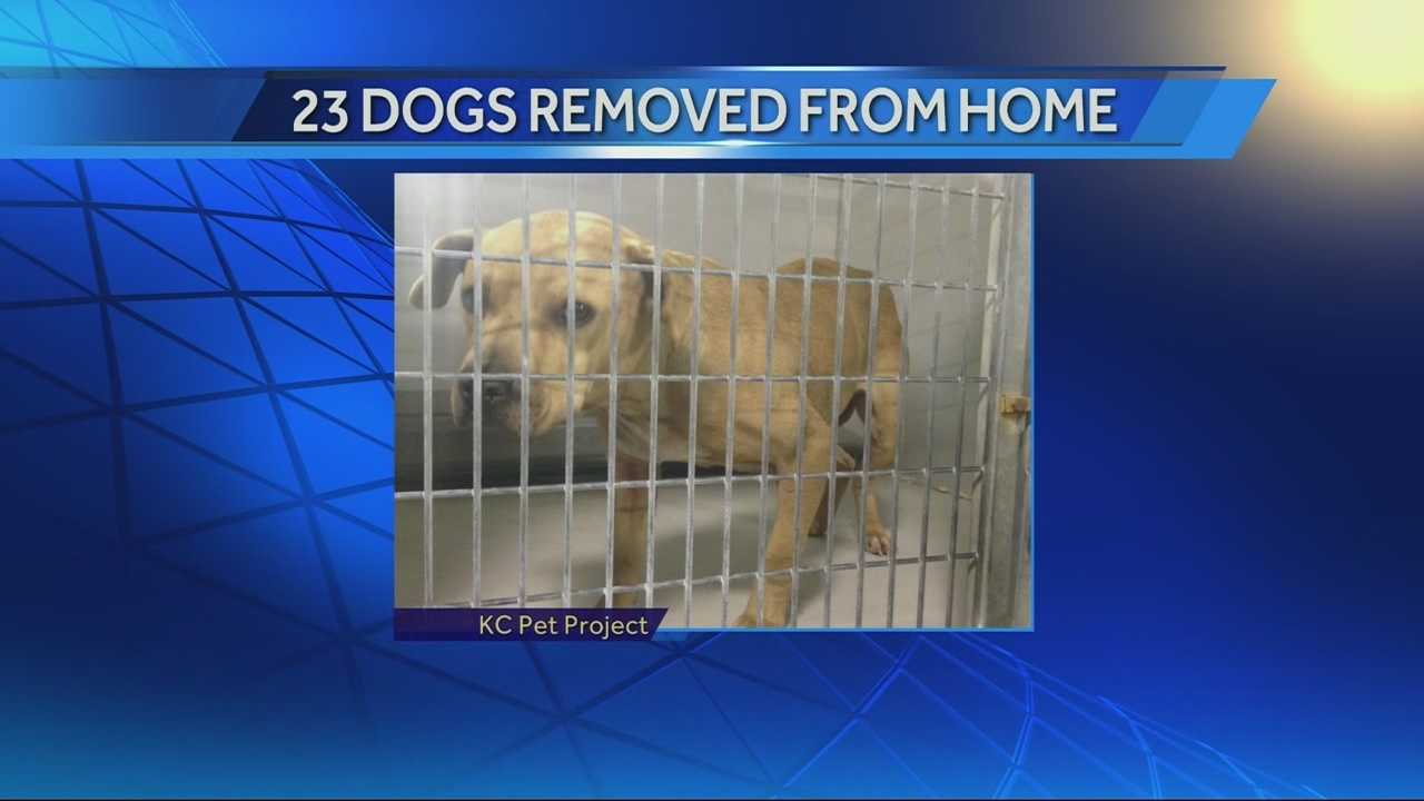 Image Dogs seized