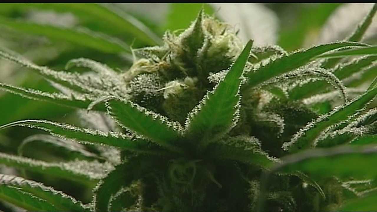 Image Generic marijuana plant 1
