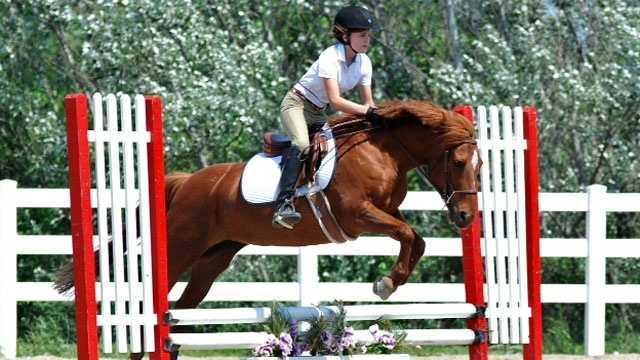 Image Show Horse - Misty