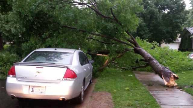 Image Tree down in Loma Vista area