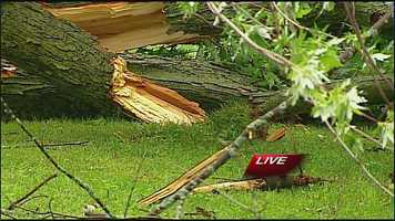 Downed tree in Raytown