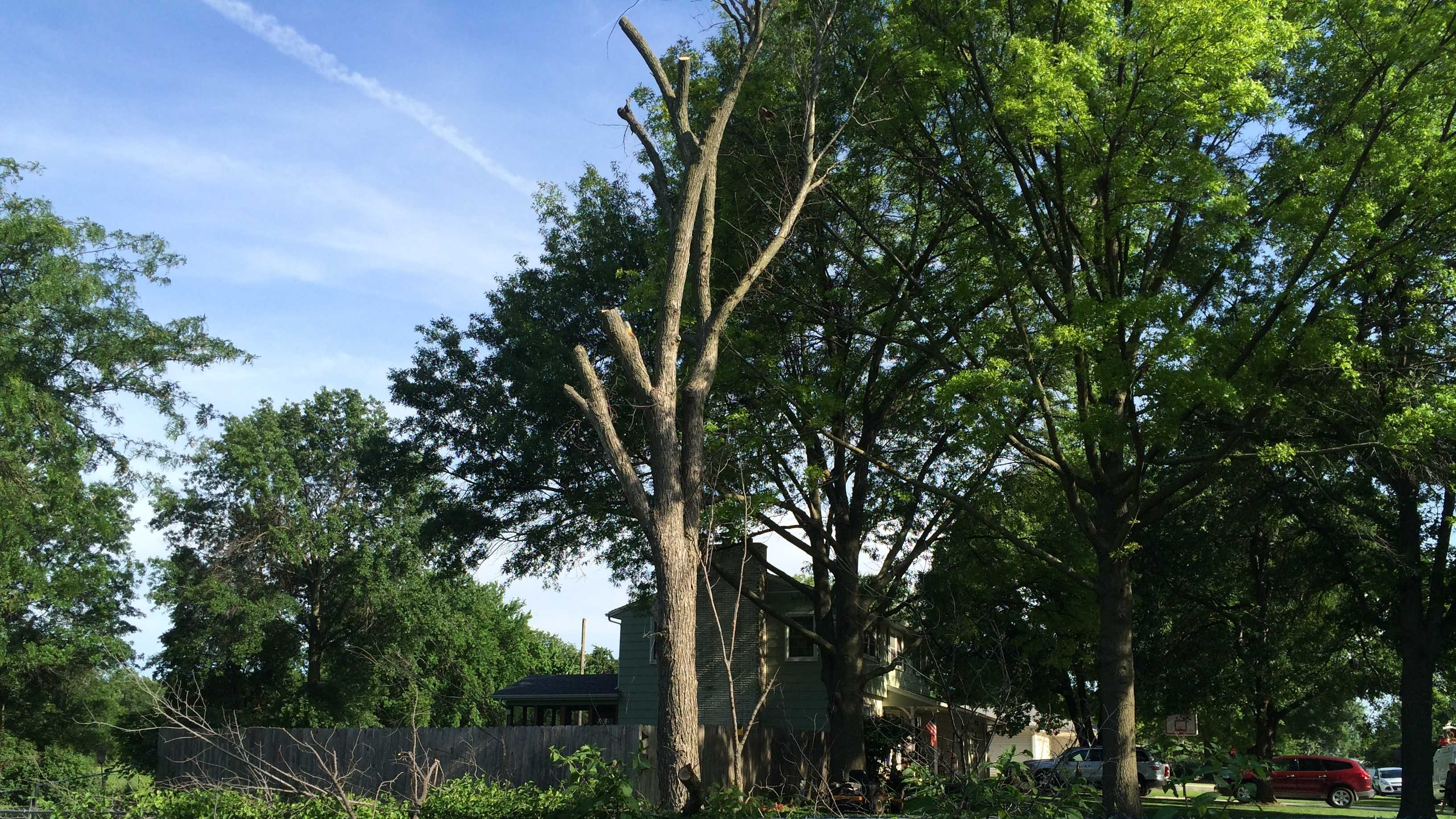 Tree trimmer falls to his death in Gard