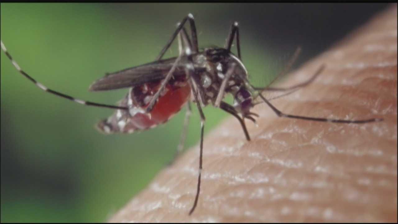 Image Mosquito generic