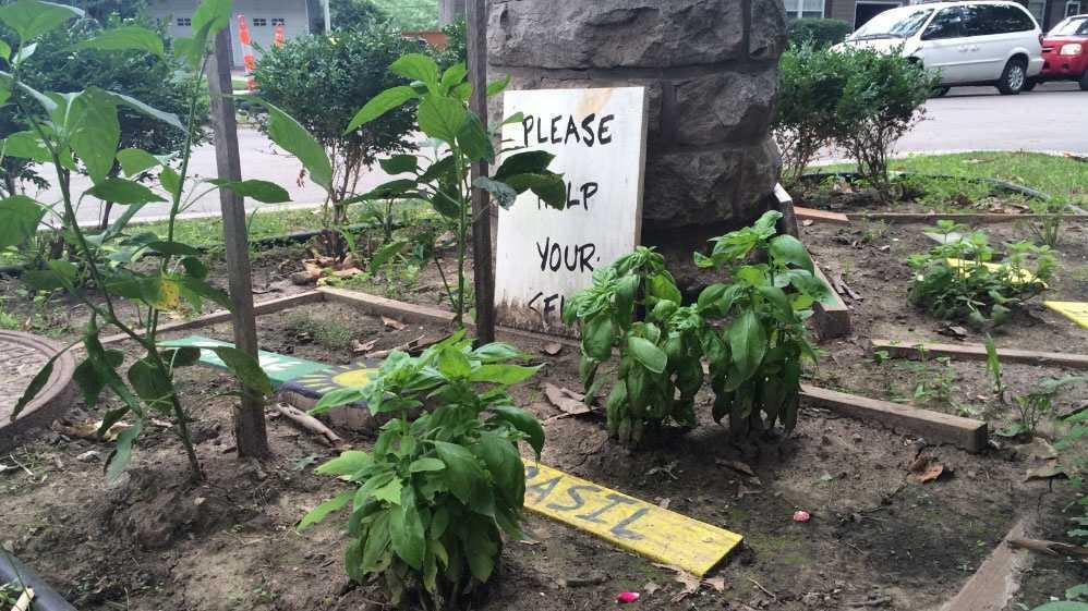 Image Pop-up garden