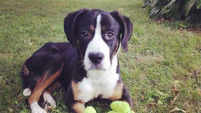 Image Injured dog Sestra