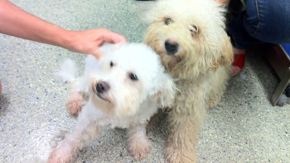 Image Wayside Waifs dogs thrown to curb
