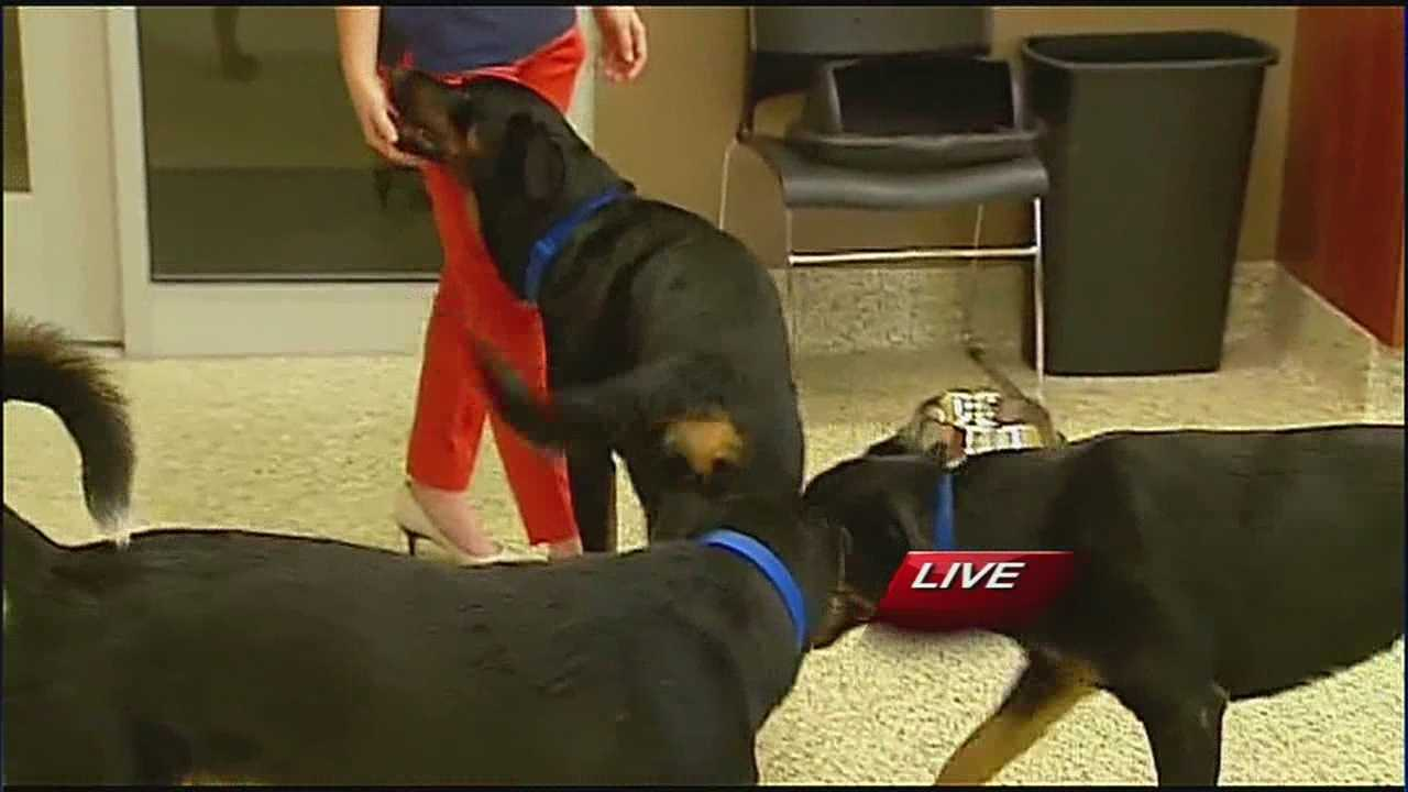 Great Plains SPCA comes to aid of man traveling with dogs