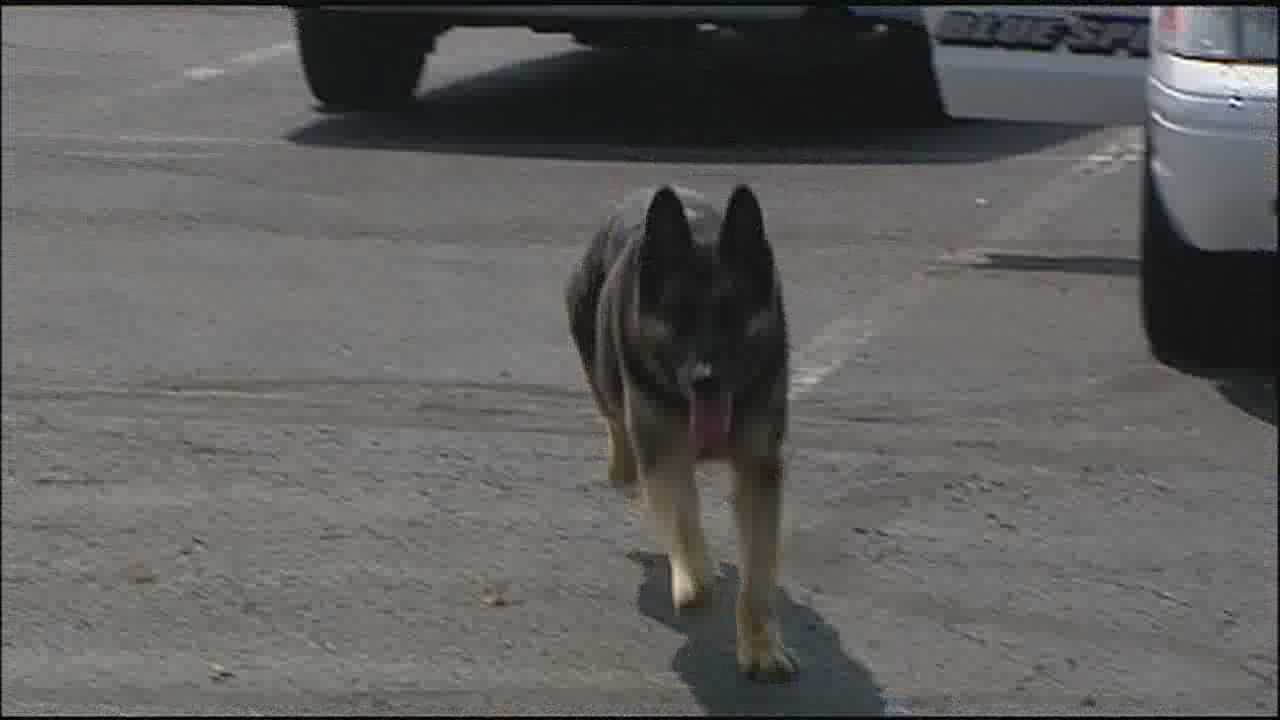 Blue Springs Police Department remembers K9