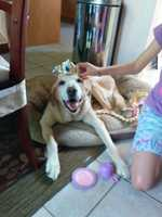 Simone Riding-Cunningham - Our Fur Daughter, Brayden Amber playing Princess Tea Party with her sister - very patient at 14!