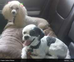 Cali and Carlos taking a ride in the air-conditioning.