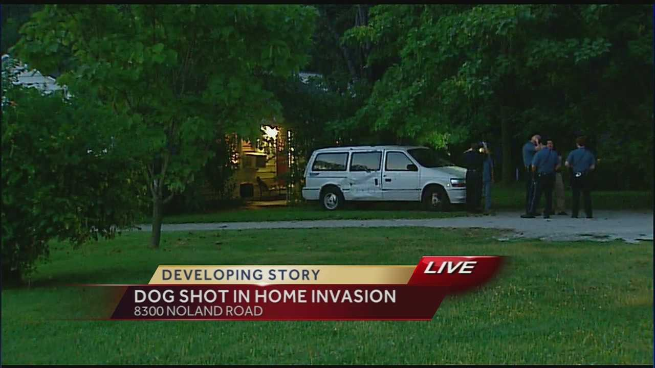 Dog shot in home invasion off of Noland Road