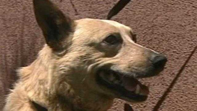 Dog recovering after being shot by cops