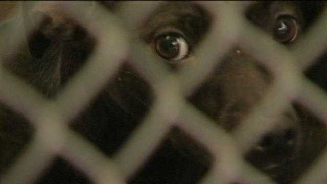 City to crack down on animal breeders