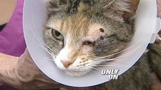 Snickers the cat is recovering after being attacked with a lawn dart.